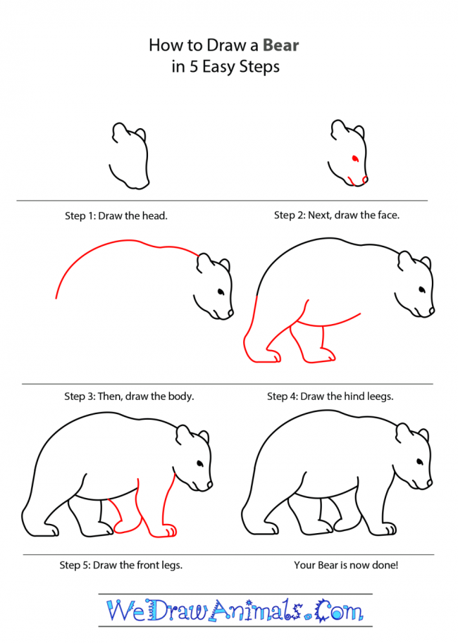 How-to-Draw-a-Bear-tutorial