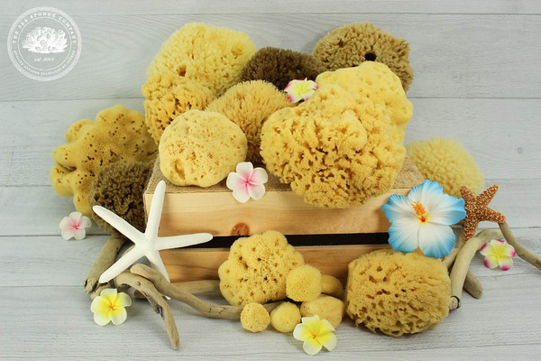 Sea Sponges from The Sea Sponge Company
