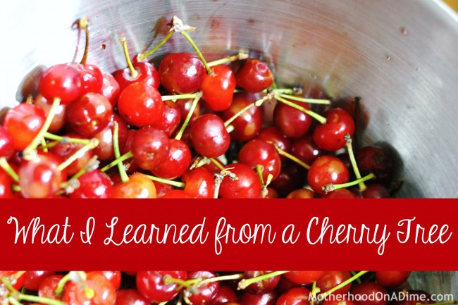 What I Learned from a Cherry Tree