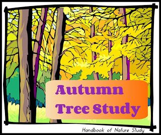 autumn tree study