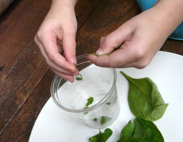 why leaves change colors - science experiment with spinach